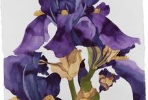 Peinture / Iris