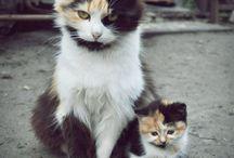 Cat / Lovecat ilovecst kitty cat