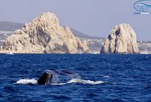 Cabo San Lucas / by MyVacationPages