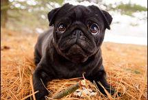 Pugs / by Jennifer Wolff