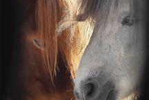 paard(rijden)