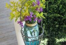 Garden/Plants/Flowers / by Laura Steffey