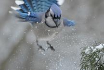 Birds/Fugle / Fugle