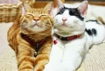 Cat / lovely cats