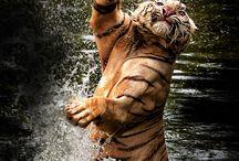 Hayvan Fotoğrafları (Animals) / Hayvan Fotoğrafları