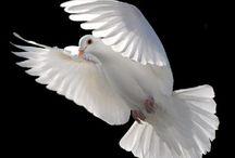 Birds of a feather flock together...... / by Brenda Crockett