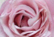 kveti