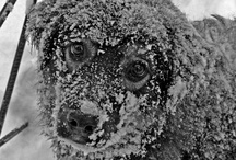 Heart Warmers...Kids,Fur-Kids, LOVE!!! / by Linda Wester
