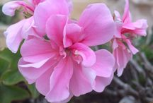 Flowers / Photos