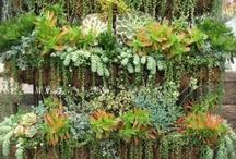 Plants & Gardens / by Leilani Decena Shepherd