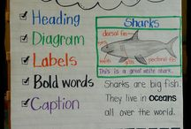 Teaching- Anchor Charts / by Haley Strohfus