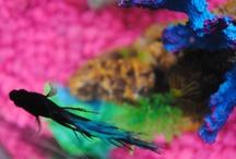 Glub! / Underwater friends!