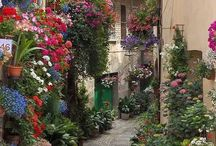 beautiful street or allyes