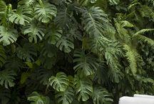 壁掛け植物