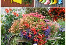 Цветочки в доме и у дома