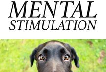 mental stimulation for dogs