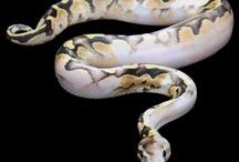 Snakey snakes