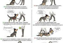 Mi perrito / dedicado a manualidades e ideas para mi perrito