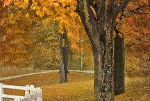 Fall / by Nancy Littlefield