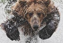 Bear :-D