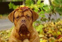 Zdrowie psów