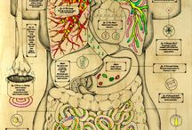 medicinsk illustration