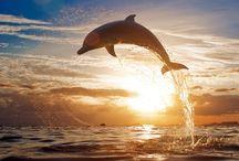 La Bacheca dei Delfini