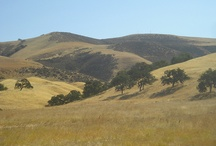 places: my (imaginary) ranch / my imaginary ranch is a simple place on land somewhere inland from monterey, california.
