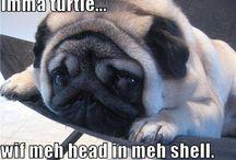 Funny pugs and pun husky!!