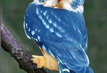 ...και όμορφες κουκουβάγιες