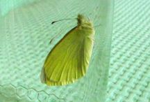 bruchi e farfalle