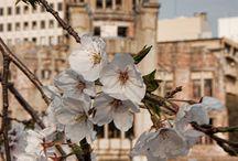 Hiroshima / Planning a visit to Hiroshima? Travel tips, itineraries, photos and more!
