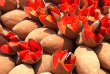 Things exotic, and edible / Unusual Fruits and Vegetables from around the world