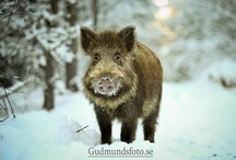 animals / by Luisa Padovan