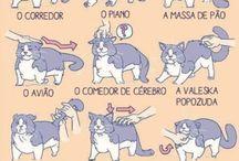 Louca dos gatos