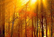 Tree Images in Nature / Beautiful photos of trees from around the world