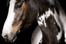 Horses / by Wendy Markowitz-Dutton