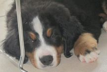 Lassie <3