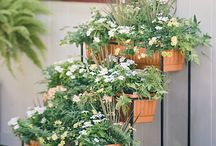 Kasvit / Plants