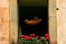 Finestre e balconi con vasi di fiori, bifore, bowindows
