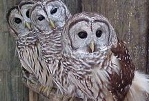 Owls / by Charity Reece