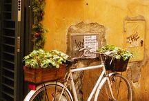 Bicycles in garden