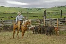 Cattle / by Peta Brenner