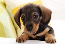 puppy love / ooooit wil ik er zo eentje...