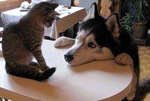 Husky n others