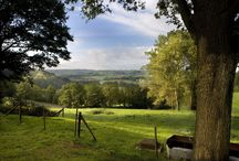 Zuid-Limburgs landschap / Prachtige foto's van het Zuid-Limburgse Landschap / by Camille Oostwegel ChâteauHotels & -Restaurants
