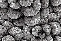 black&white&stripes