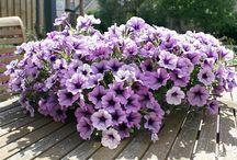 Eigen werk - Bloeiende planten / Eigen foto's en werk van Bloeiende Planten