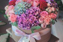 Box kvety