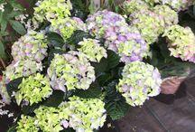 Foto's planten en indeling tuin